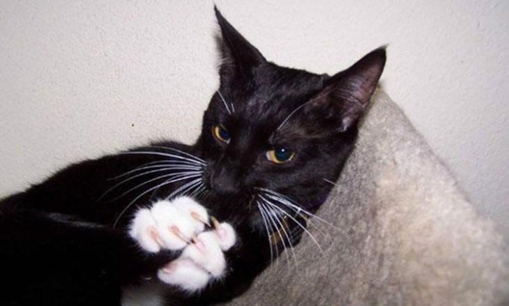 gatos siniestros. gato negro