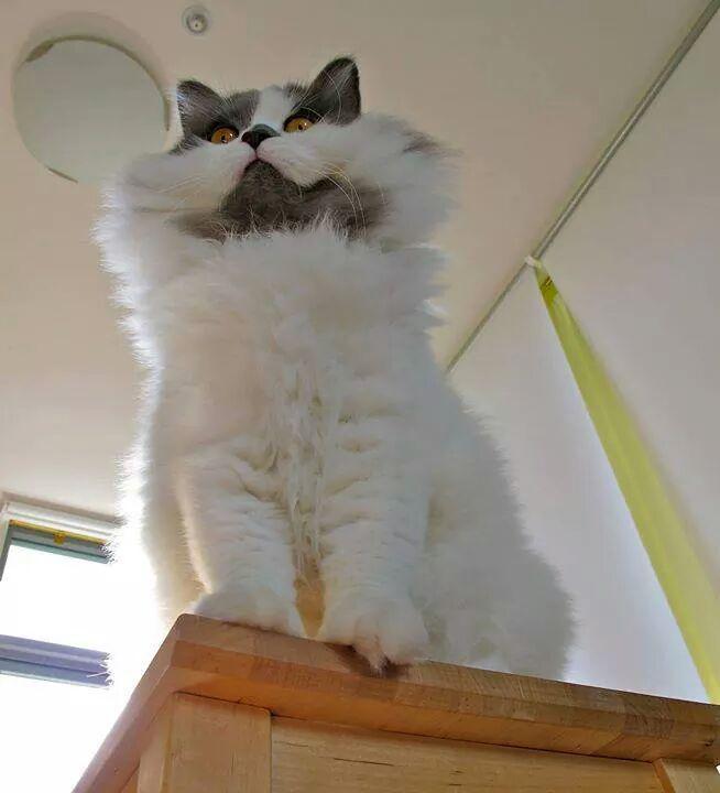 gatos siniestros