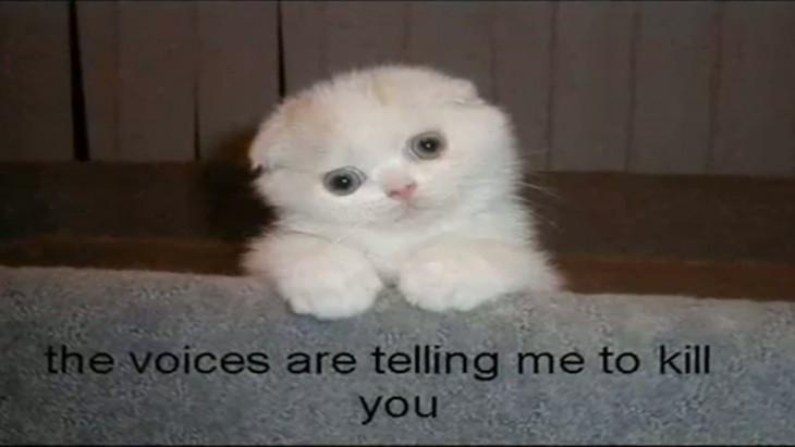 gato: las voces me dicen que te mate