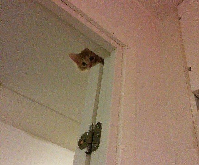 gato sobre un marco de una puerta