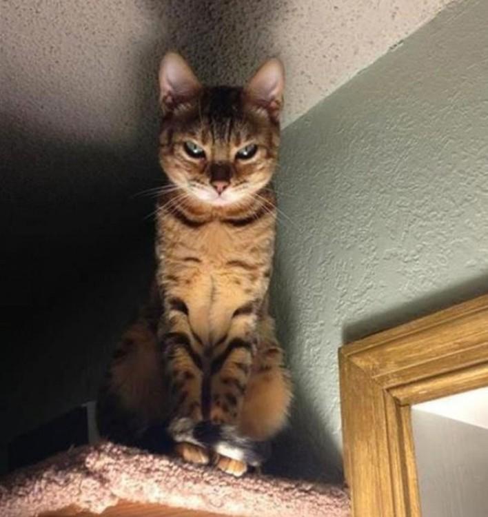 gatos siniestros (5)