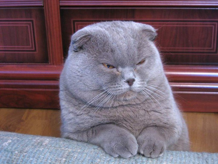 gatos siniestros (6)