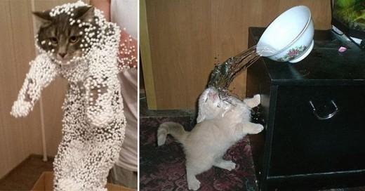 gatos que tomaron pesimas decisiones de vida