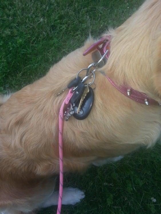 perro con llaves en el collar