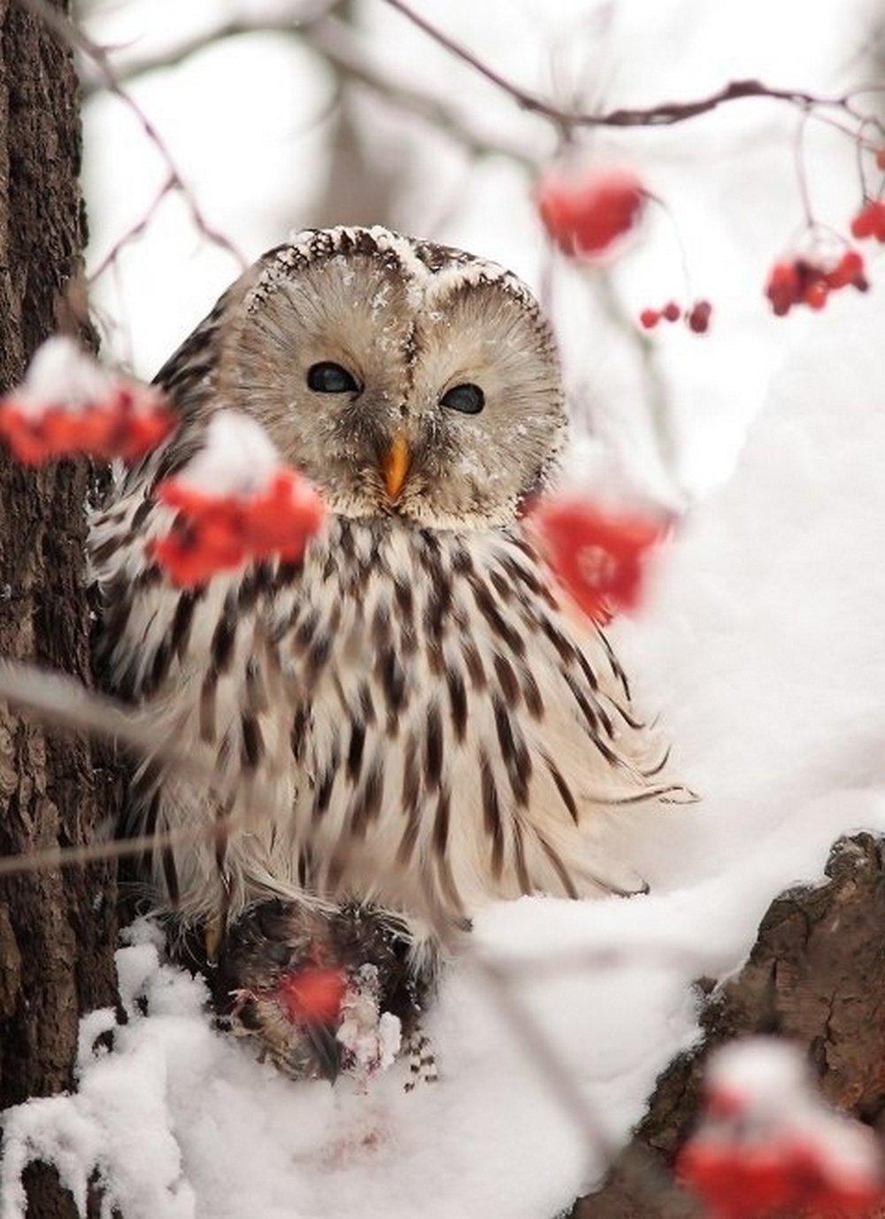 hermosas fotos de búhos  (39)