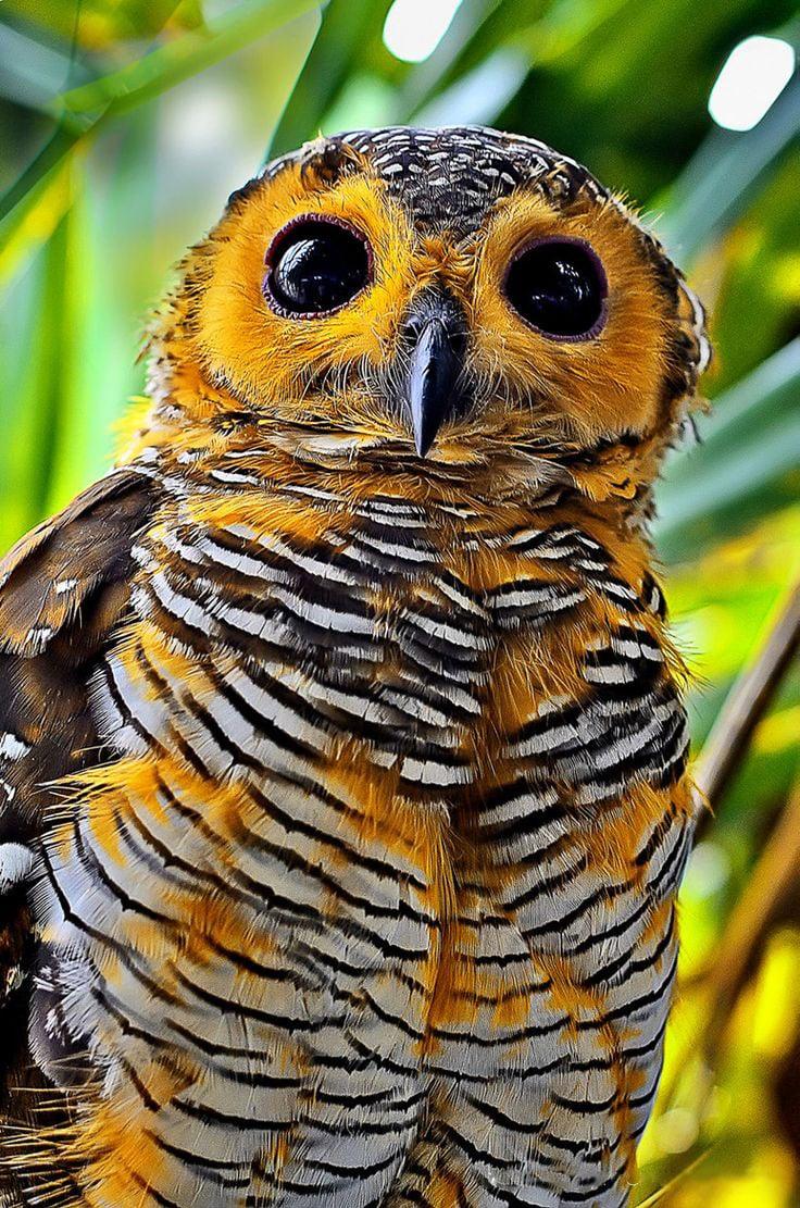 hermosas fotos de búhos  (4)