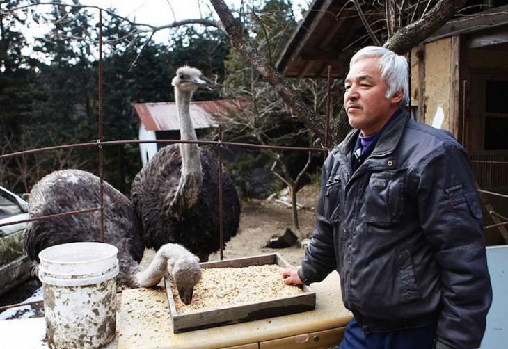 japones dandole decomer a avestruces