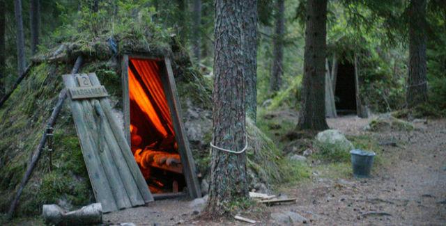 cabaña junto a un árbol en un gran bosque
