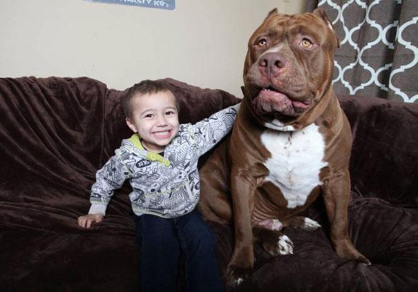jordan con hulk, perro más grande