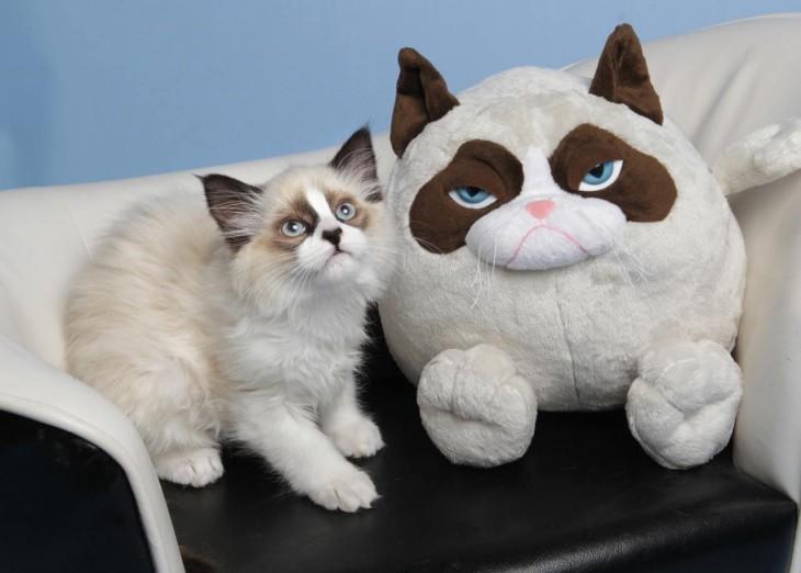 gatito igual a perro de peluche