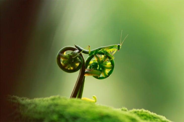 Una mantis religiosa sobre helechos que forman y simulan una bicicleta
