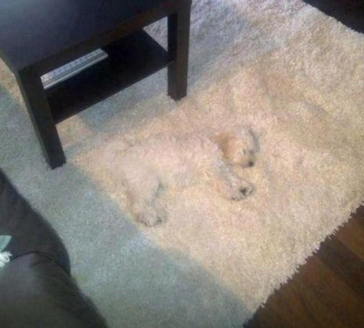 alfombra en color blanco con una tela similar al pelo de un perro que esta acostado sobre ella