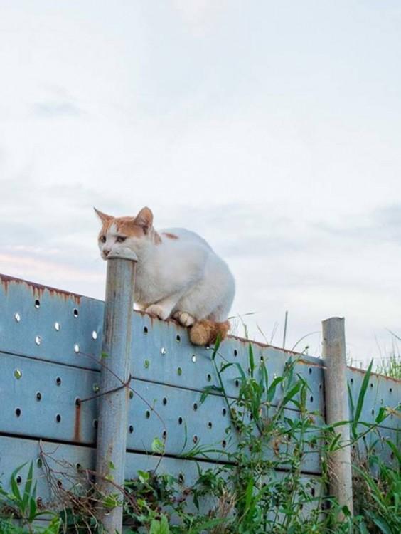 Gato sobre una barda simulando que se come un poste