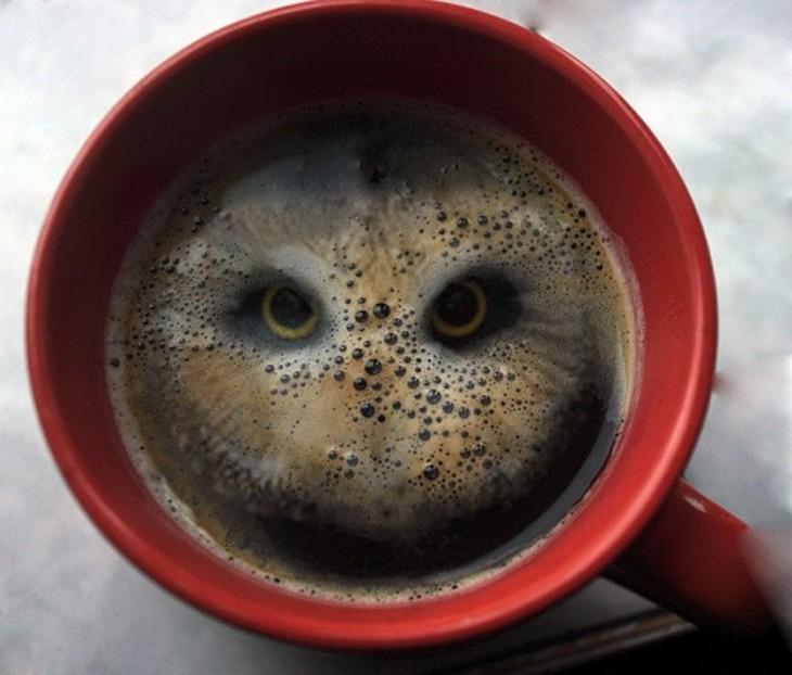 Foto sobre una taza de café que su contenido simula la forma de una lechuza