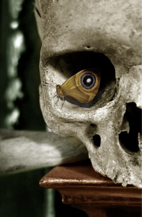 Cráneo sobre un mueble y una mariposa parada sobre una de sus cuencas simulando un fascinante ojo