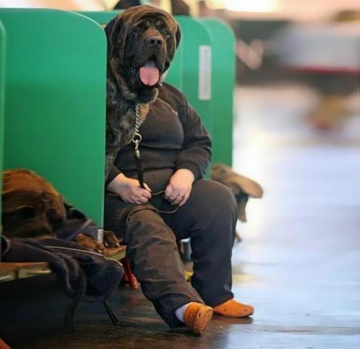 Una mujer sentada sobre una banca con un perro a lado y simulando que su cabeza es la del animal