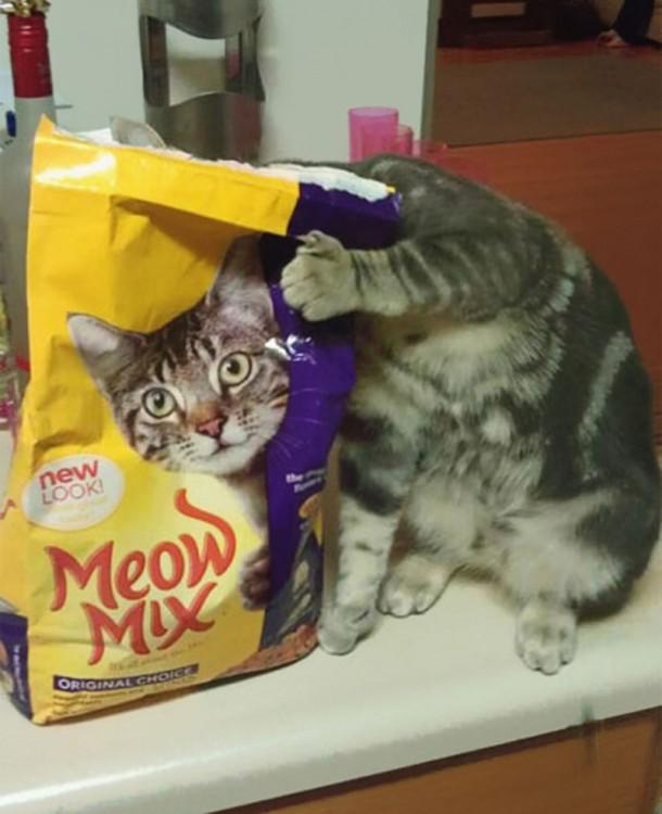 Un gato escondiendo su cabeza tras una bolsa de comida para gatos