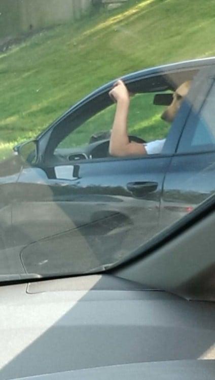 Foto tomada desde un carro hacia otro donde aparece un cuerpo de humano con cabeza de perro y simula que el animal va caminando