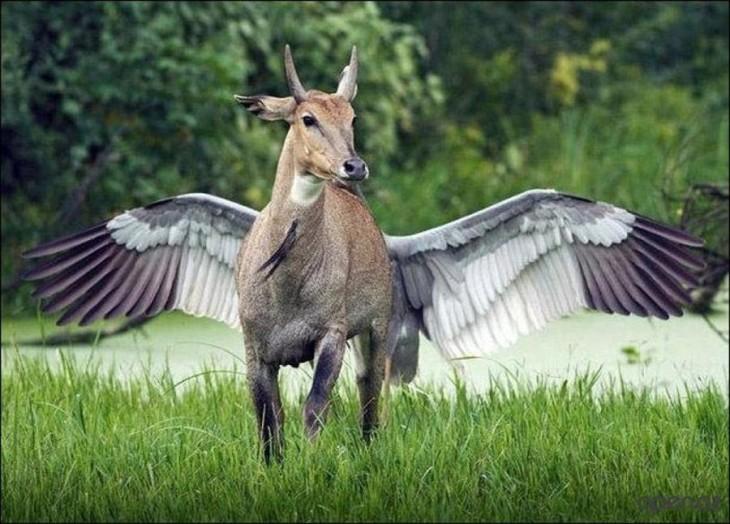 Venado que parece tener alas debido a que un ave viene tras él