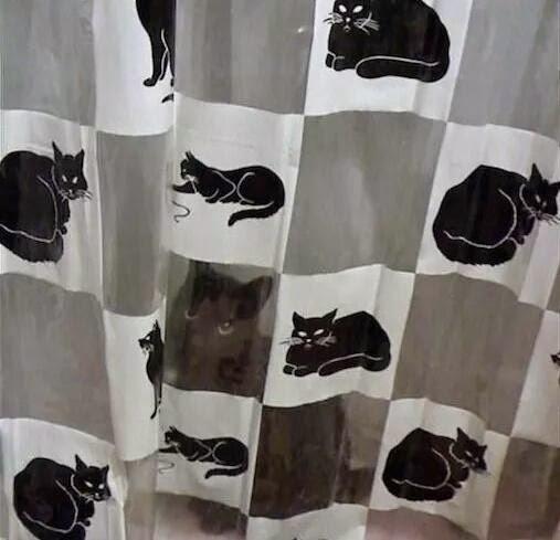gato camuflado entre la cortina de la ducha