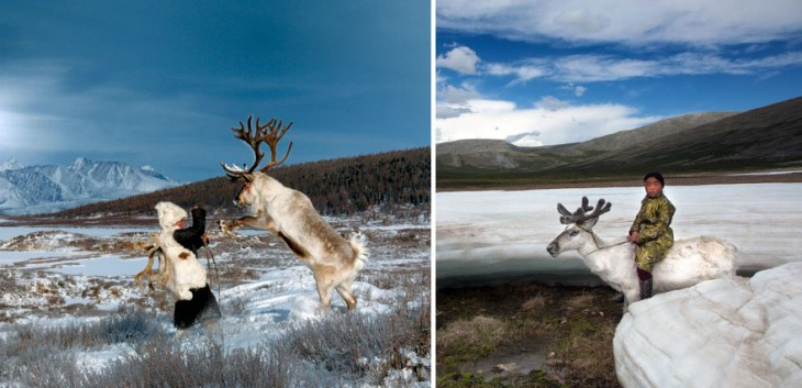 renos salvajes en mongolia