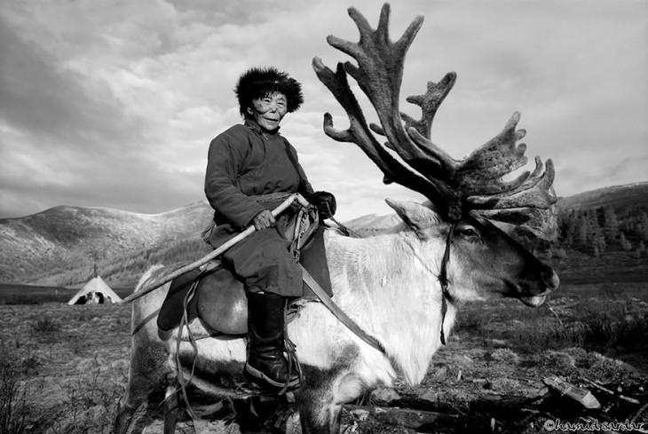 hombre mongol arriba de sus renos
