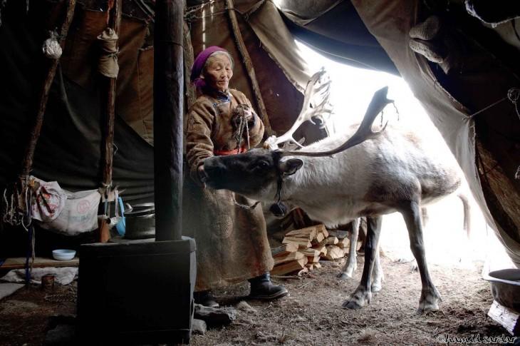 mujer mongola con un reno adentro de su casa
