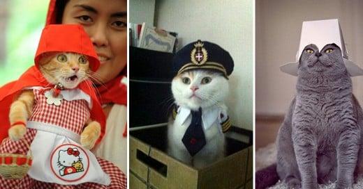 las mejores imagenes gatos todos los tiempos