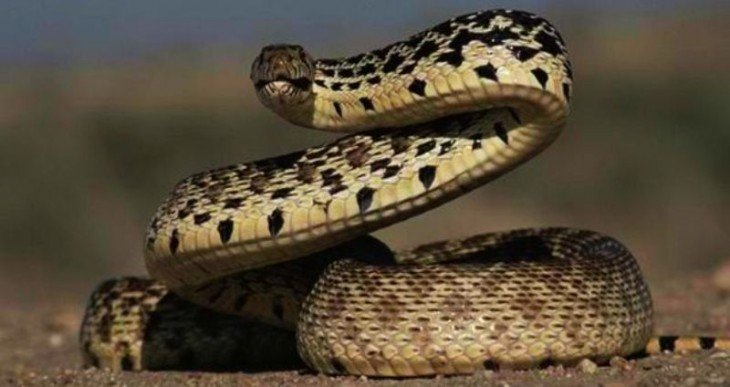 serpiente enrroscada