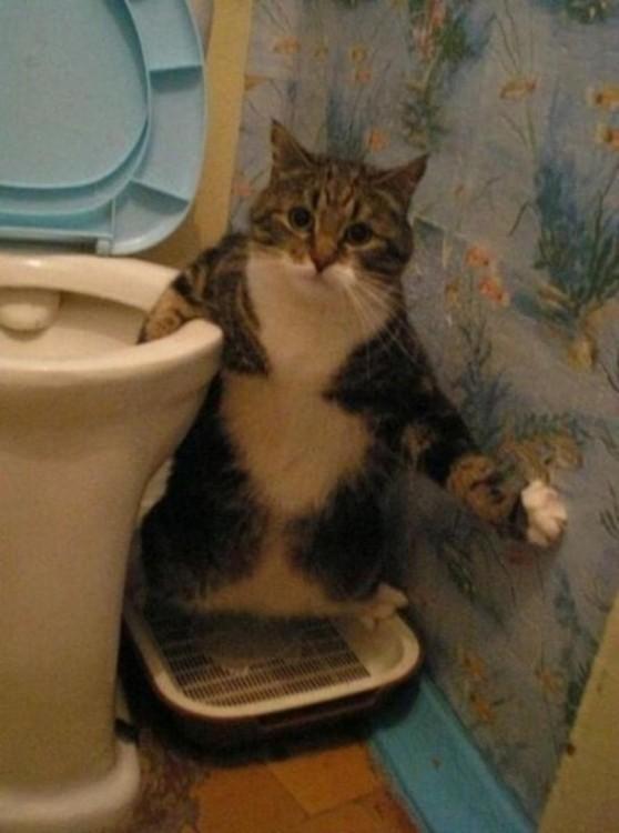 gato sentado con una pata en el toilet