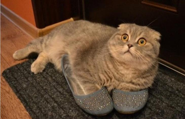 gato gris usando pantuflas