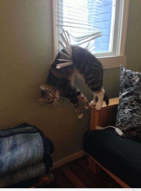 gato enredado en la ventana