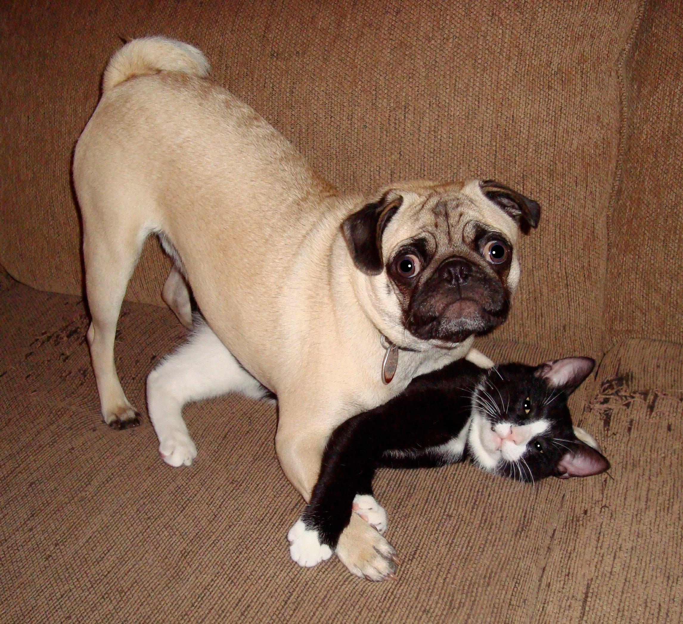 Tumblr: Mascotas Que Fueron Descubiertas Haciendo Travesuras