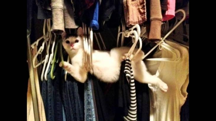 gato blanco entreverado en perchas