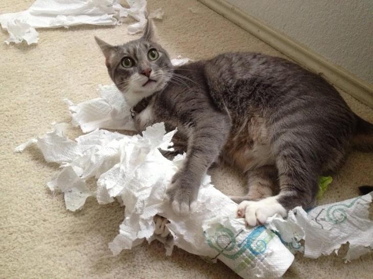 gato gris rompiendo papel