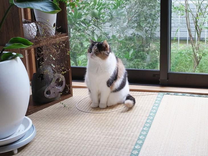 gato sentado en un circulo al lado de la ventana