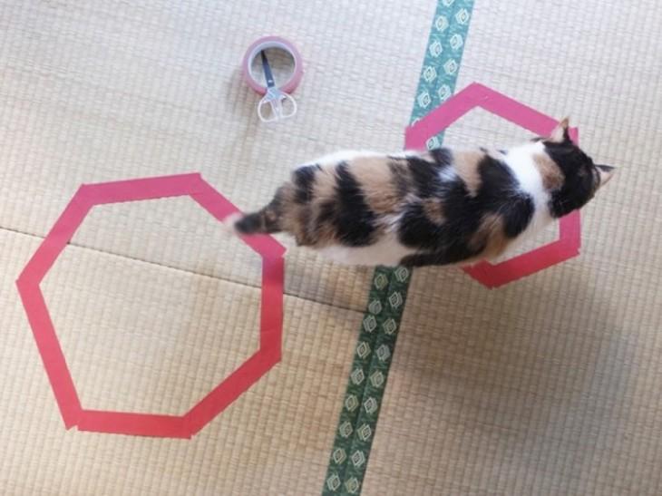 gato blanco y negro caminando encima de circulo violeta