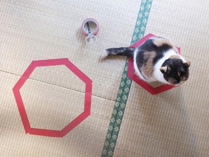 gato blanco y negro sentado en circulo violeta