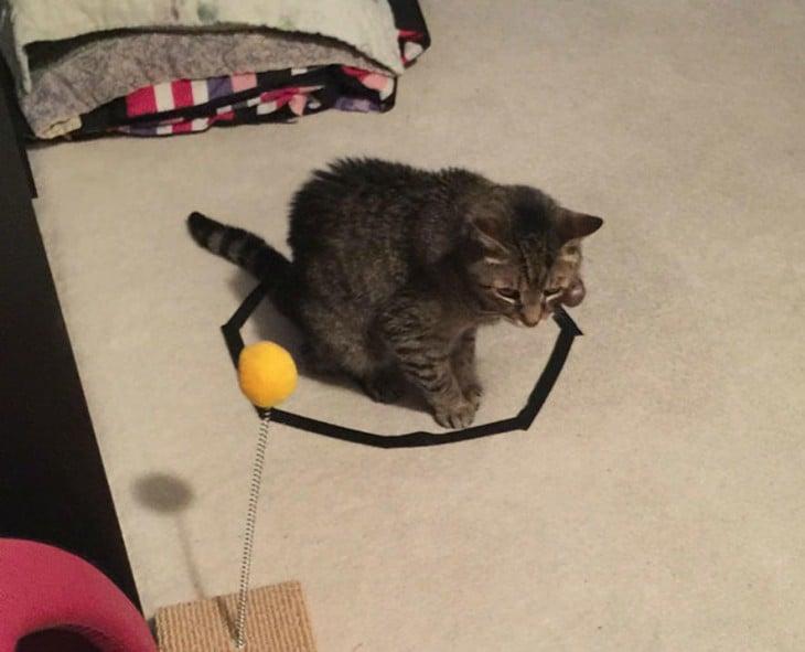 gato atigrado sentado en un circulo