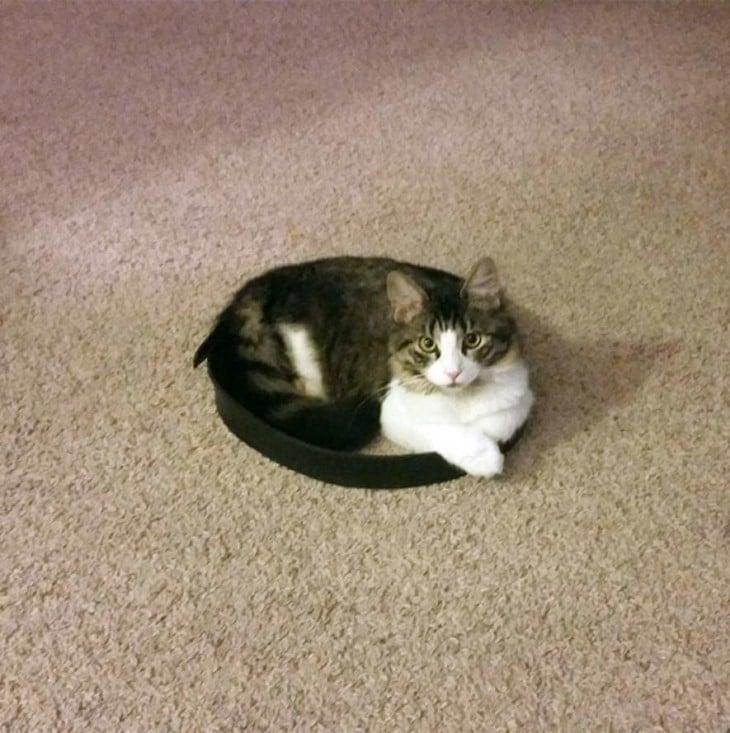 gato blanco y negro sentado en un circulo