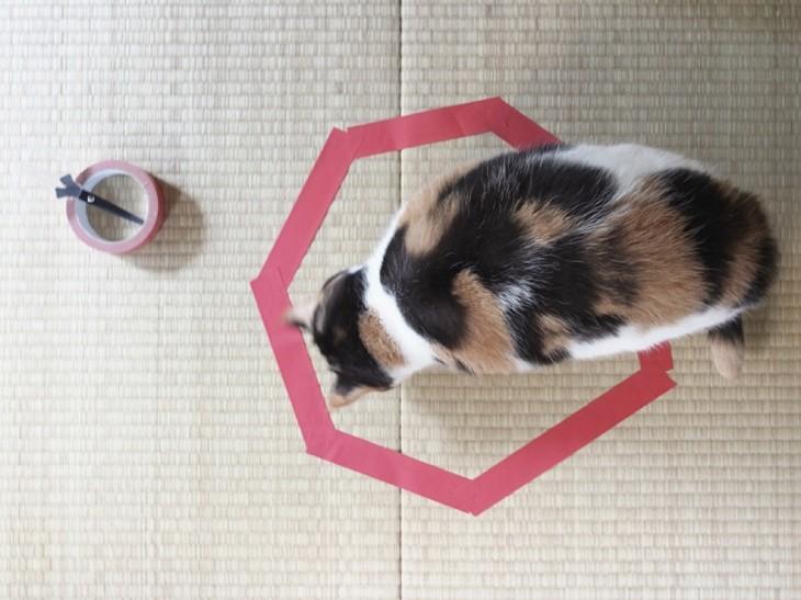 gato blanco y negro parado en círculo violet