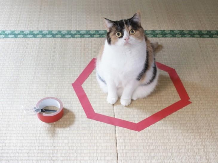 gato blanco y negro sentado encima de círculo  violeta