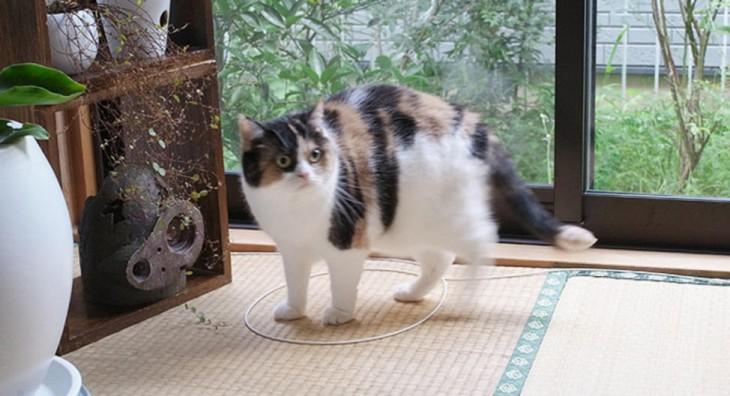 gato blanco y negro encima de un círculo en el piso
