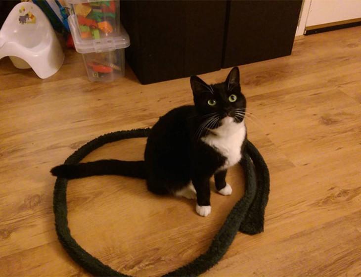 moda atrapando gatos psicologicamente (9)