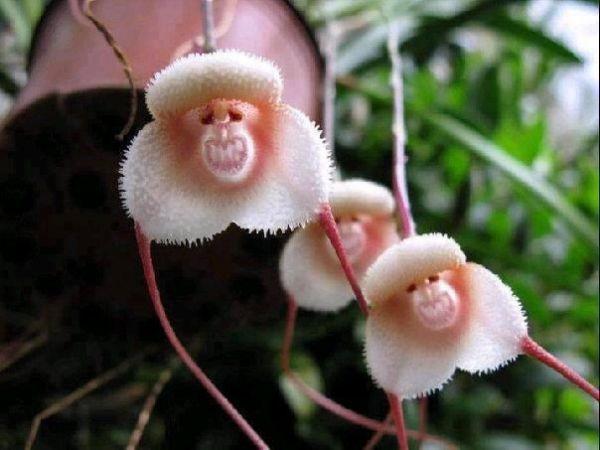flores que forman la cara de un mono de color rosa y blanco