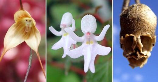 pareidolia de flores que paresen personas animales y objetos