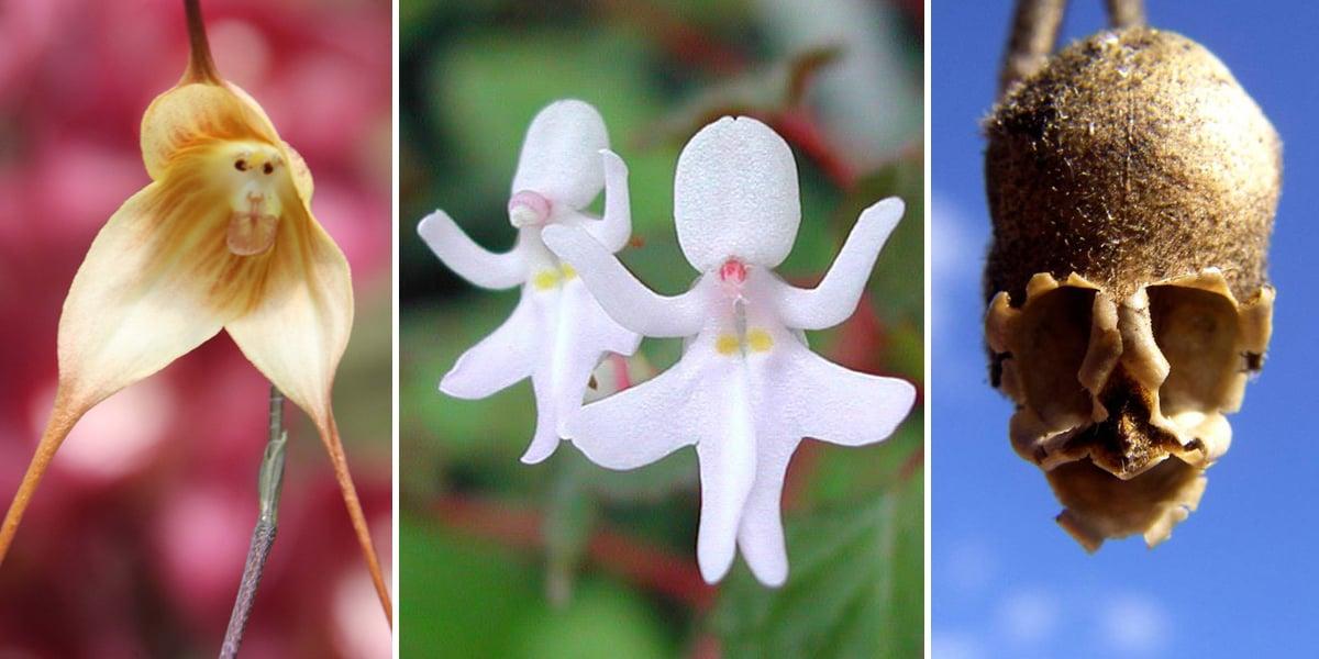 17 Flores Su Aspecto Parece Personas Animales O Cosas