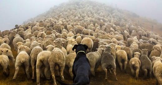 fotografo retrata a los perros mas trabajadores del mundo