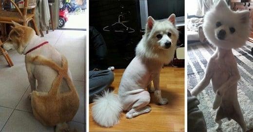 perros peor corte de cabello del mundo