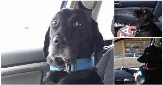 perros que fueron engañados y llevados al veterinario